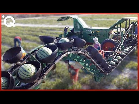 Modern Agriculture Machines