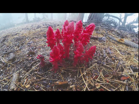 Hiking Mt Waterman | Angeles National Forest, CA
