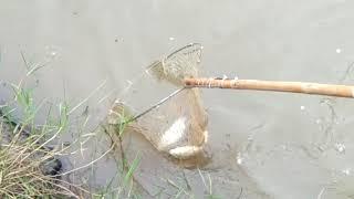 Tes setrum ikan luar negri susan 735mp