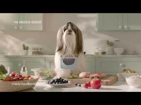 สมาร์ทฮาร์ท โกลด์ โฮลิสติก สูตรสำหรับสุนัขที่ปัญหาคราบน้ำตา และผิวหนังแพ้ง่าย ต้องใส่ใจเป็นพิเศษ!!!