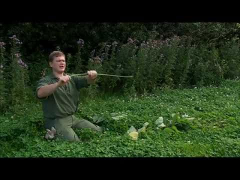 Ray Mears - How to make natural cordage from nettles, Bushcraft Survival