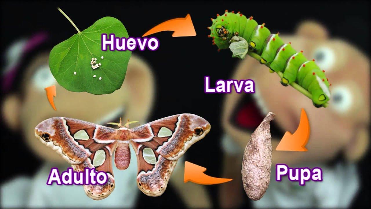 Recinto Educativo Parque Sinaloa Jardín Botánico Los Mochis 2/3 - YouTube