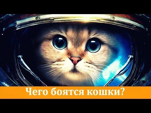 звуки котов - Прослушать музыку бесплатно, быстрый поиск