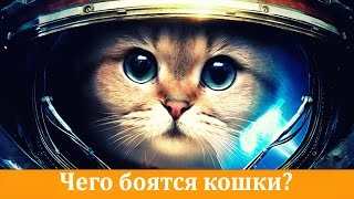 ЧЕГО БОЯТСЯ КОШКИ(Чего боятся кошки? 1Шум Любые источники громких и резких звуков такие как взрыв петарды, включённый пылесос..., 2016-09-05T09:36:46.000Z)
