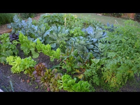 Growing a Fall Vegetable Garden in the Big City!