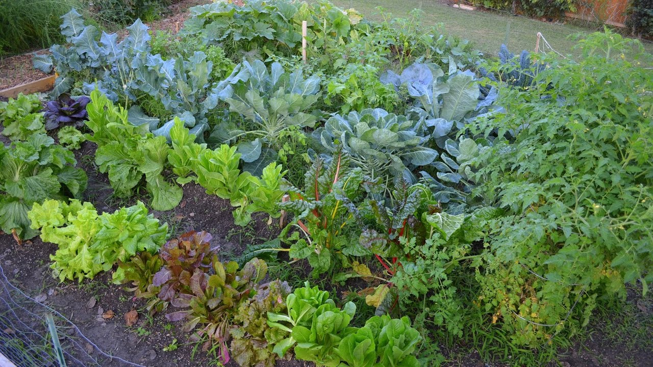 growing a fall vegetable garden in the big city youtube