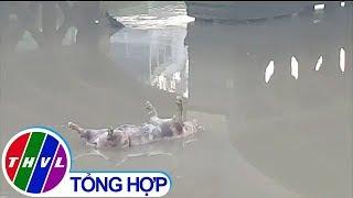 THVL | Vẫn còn tình trạng bỏ xác heo chết do nhiễm bệnh dịch tả heo châu Phi trên sông rạch