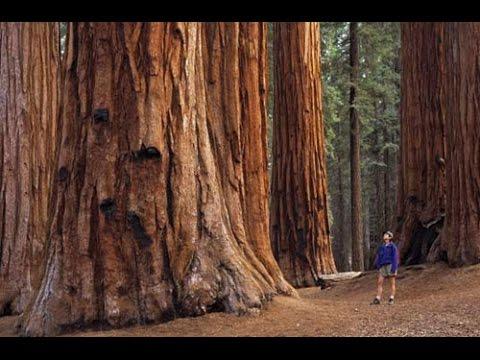 Sequoia park/Секвойя парк, обязательно всем побывать... Калифорния