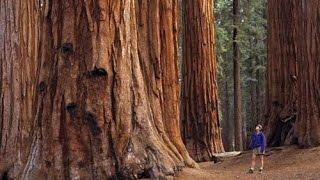 видео Национальные парки США