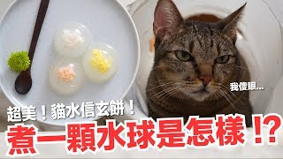 煮一顆水球給貓咪 !? 短褲超傻眼...貓水信玄餅【貓副食食譜】好味貓鮮食廚房EP155
