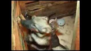 О выявлении просроченной вакцины для животных в приюте