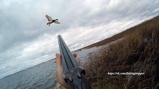 Осенняя охота с подсадными утками