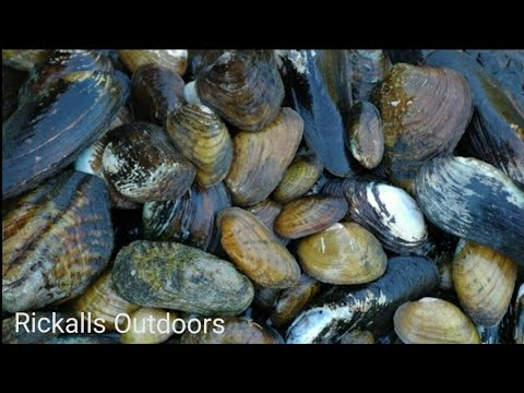 Coastal foraging: clams and mussels