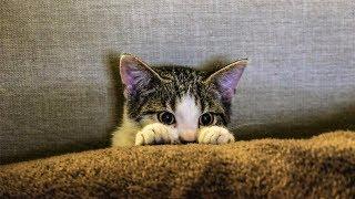 Смешные коты кошки и другие животные Funny Cats 2019 – НЕ РАЗРЕШАЕТСЯ ТОСКОВАТЬ КРУТЫЕ КОТИКИ