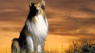 Sovrano - Lassie-t minden
