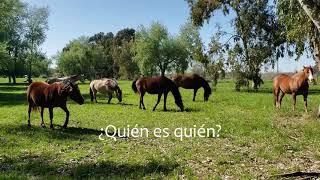 Momento AHA con caballos