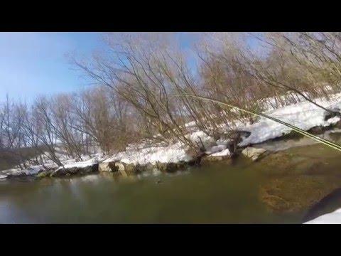 Fly Fishing Beaver Creek MD (1/30/16)