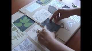 O Meu Herbário * My Herbarium (Part 1)