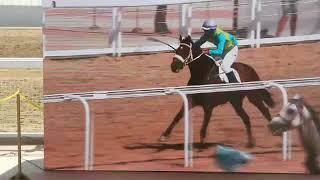 Казахстанская лошадь выиграла Золото на Всемирных играх кочевников-2018 в Киргизии World Nomad Games