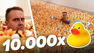10 000 Enten in unseren Pool 🐤
