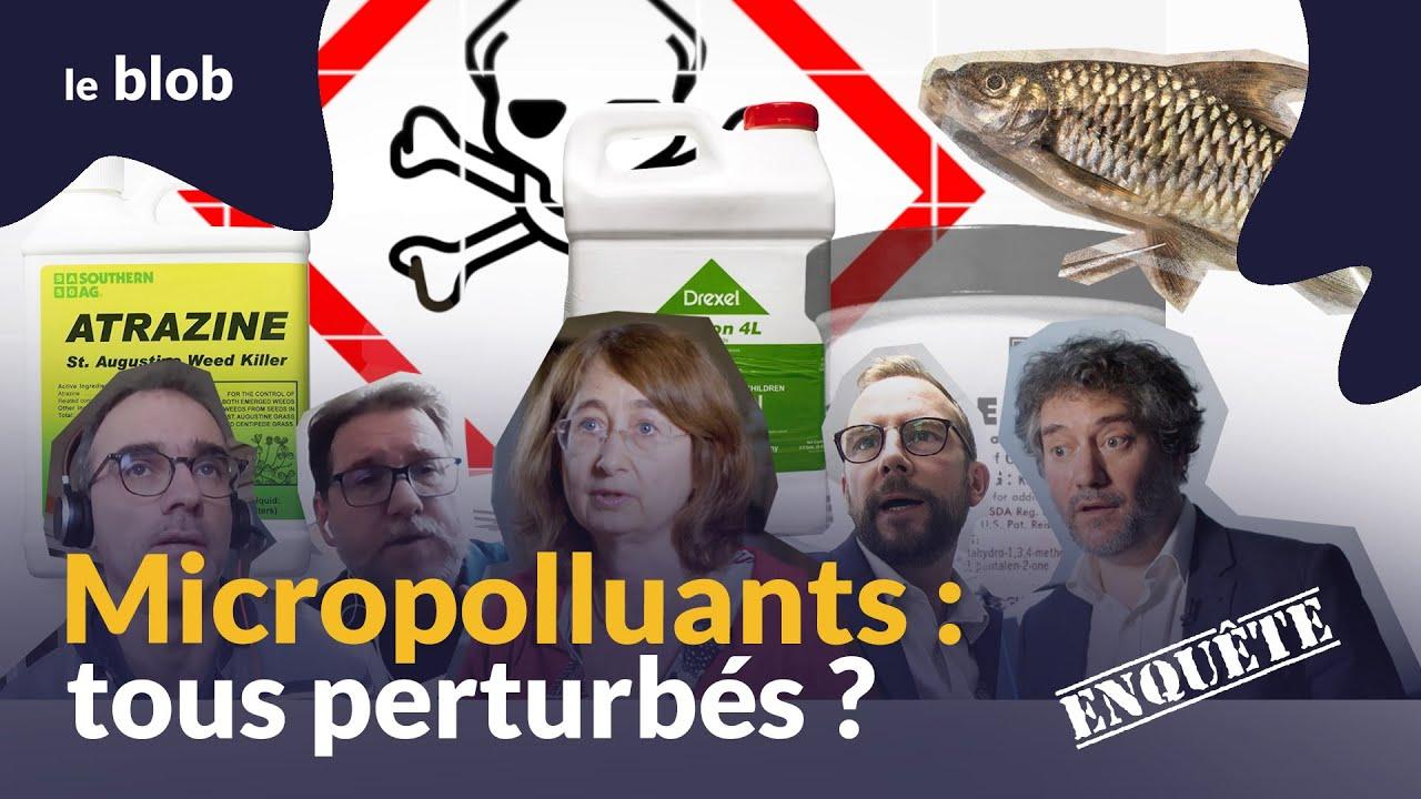 Micropolluants : tous perturbés ?   Enquête