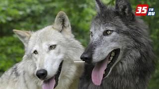 В России определили потенциально опасные породы собак