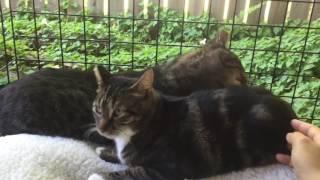 Maravel + Neelix: A feral cat love story