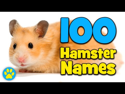 100 Hamster Name Ideas!