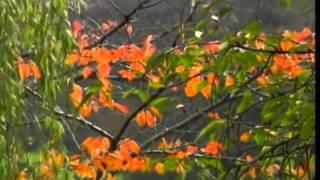 黄乙玲-難忘的情歌.flv