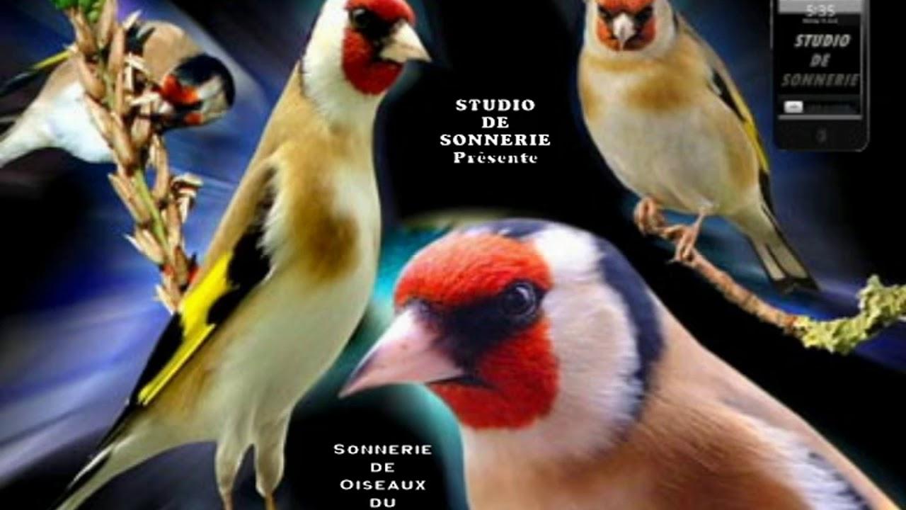 sonnerie oiseaux chardonneret