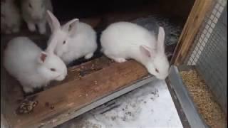 лечение крольчат от вздутия живота
