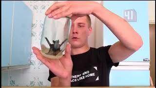 Летучие мыши в квартире