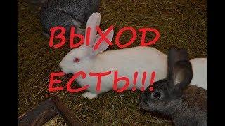 УЖАС кролиководства!!! ушной клещ!!