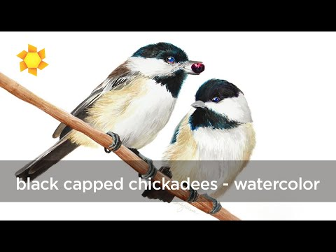 Black Capped Chickadees Watercolor