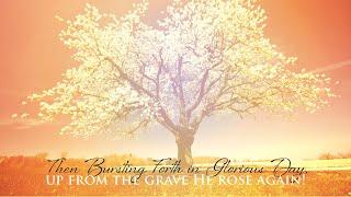 Homily at Easter Vigil, Christ the King Madisonville, KY, April 11, 2020