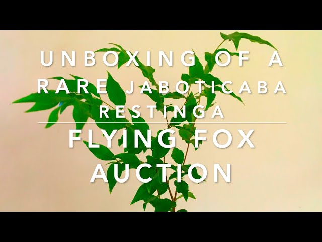 Unboxing a Rare Jaboticaba Restinga from Flying Fox Fruits