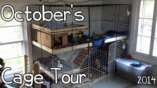 October Rabbit Cage Tour 2014