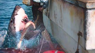 상어 영화 중에, 결말이 가장 소름 돋는 영화 1위...  [영화리뷰 결말포함]