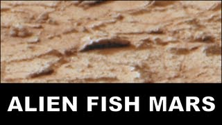 LIFE ON PLANET MARS - Alien Fish & Jellyfish Fossils. ArtAlienTV - 1080p