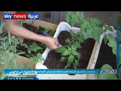 مبادرات لتشجيع الزراعة على أسطح المباني والشرفات في لبنان  - نشر قبل 4 ساعة