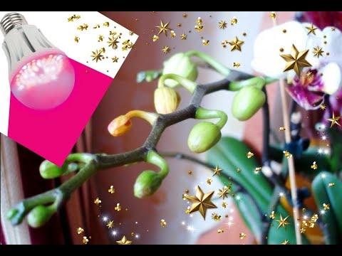 ОРХИДЕИ🌸 почему сохнут бутоны у орхидей? Мои наблюдения💋