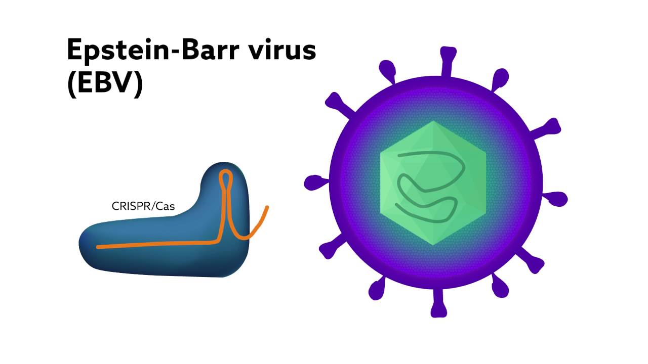 Using CRISPR to combat viral infections: a new way to treat