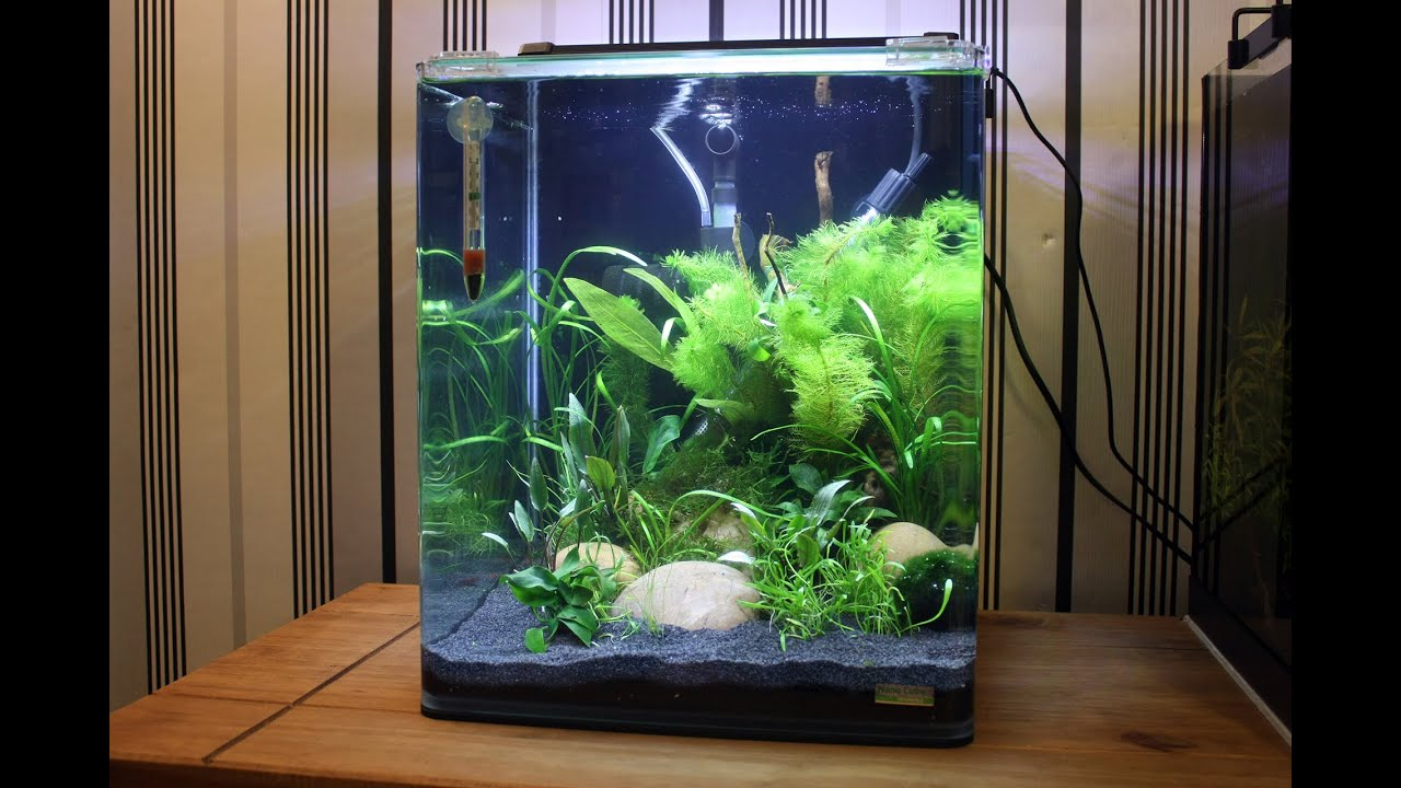 Dennerle nano cube shrimp tank 30 litres youtube for Chauffage aquarium