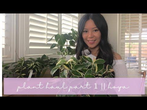 Plant Haul Part 1    Hoya