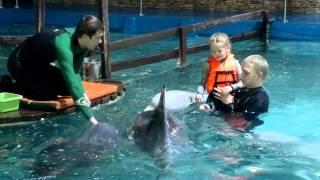 Ярославский дельфинарий. Даша с дельфинами. 06.01.13.(, 2013-01-06T18:35:43.000Z)