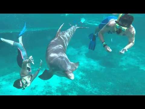 Curacao's Dolphin Academy - snorkel (freedive)