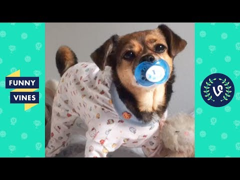 Funny Animals Compilation | Cute Pets, Dogs, Birds, Cats Videos