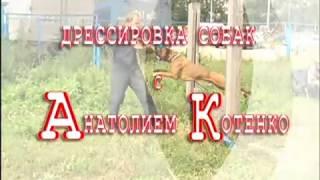 Кинологический центр Барс. Дрессировка собак в Новосибирске