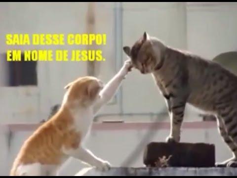 video do gato exorcista