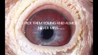 wynand wolmarans - ViYoutube